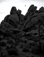 The Tightrope Walker, Joshua Tree